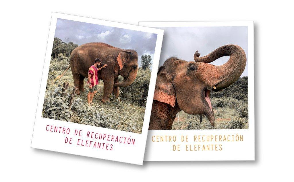 Centro de recuperación de elefantes día 6. Qué ver en Tailandia en 15 días