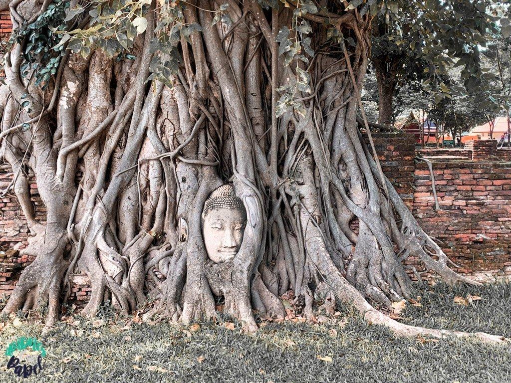 Cabeza de buda del Wat Mahatat. Qué ver y hacer en Ayutthaya en 1 día
