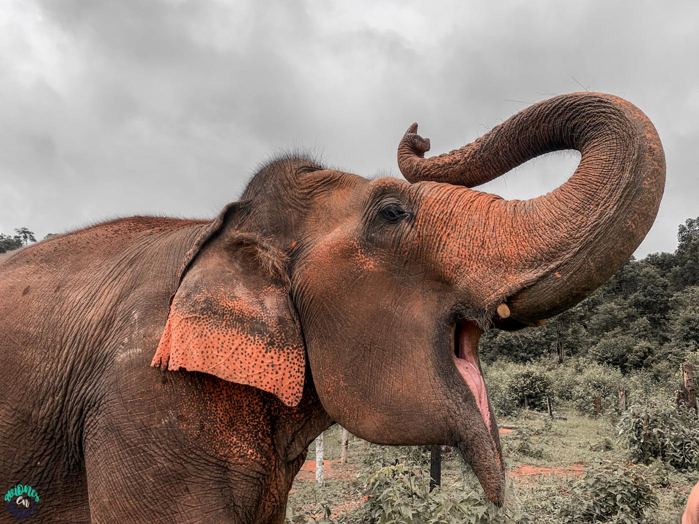 Qué hacer en Chiang Mai en 3 días: Visitar Elephant Nature Park