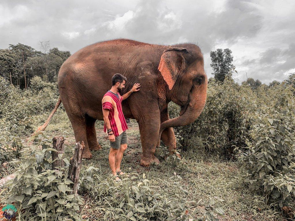 Centro de Recuperación de Elefantes en Chiang Mai