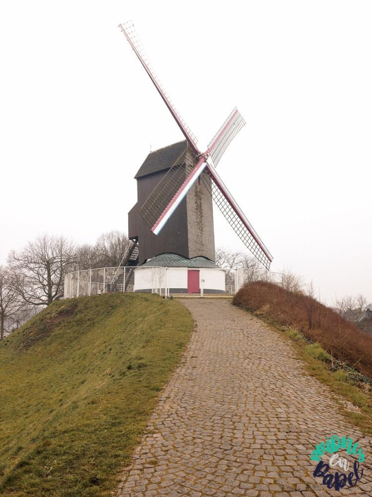 Molino Koelewei (Koeleweimolen), Damme